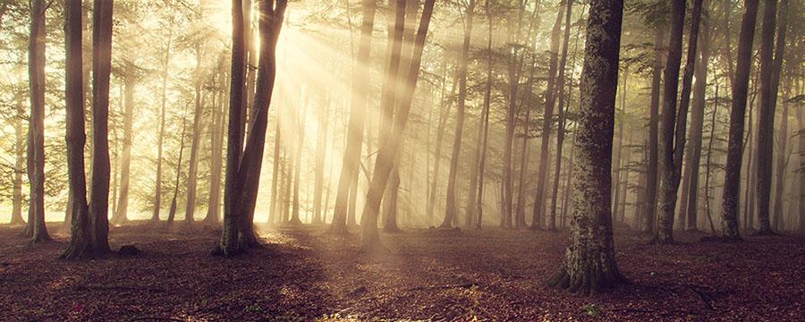 Yogawalk mit Yoga Jetzt im Wald